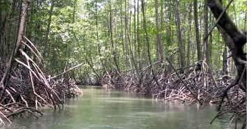 Un court trajet en bateau à travers la mangrove vous emmène au village de Salt Creek