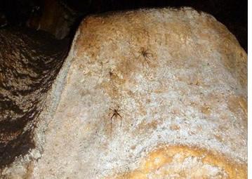 Vous trouverez araignées dans les murs de la grotte